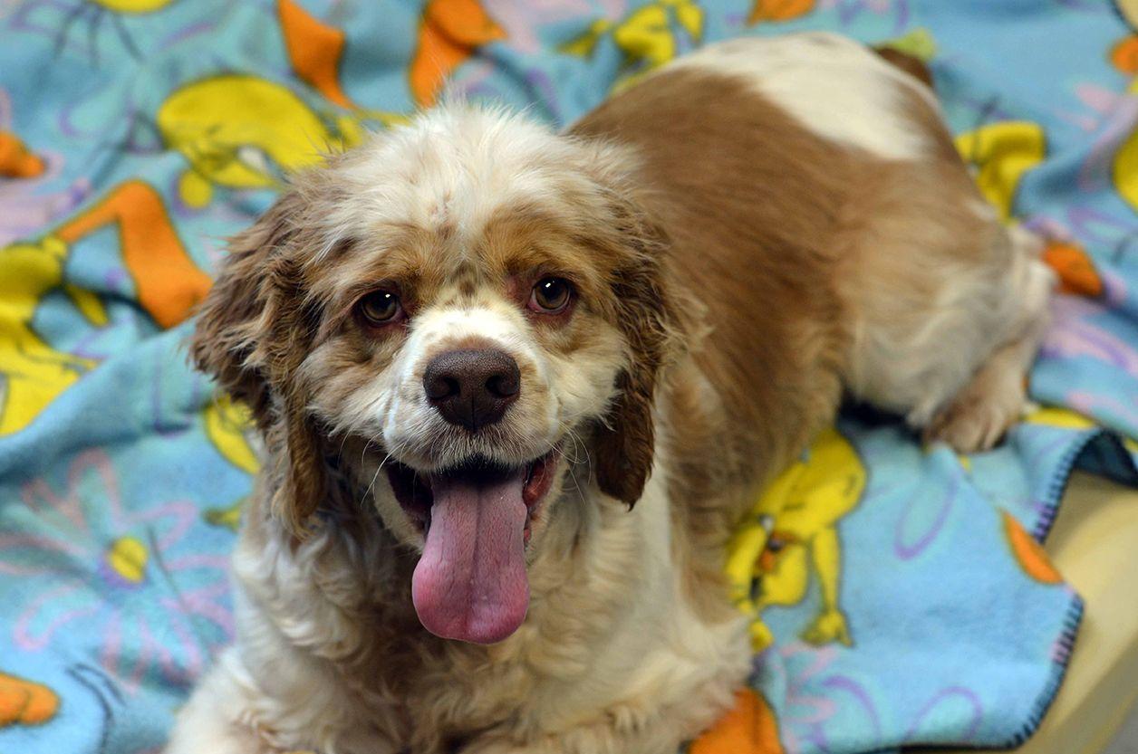 Peninsula Dog Adoption