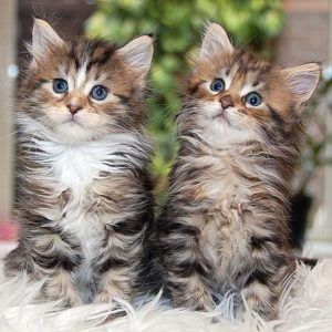 pair-of-kittens