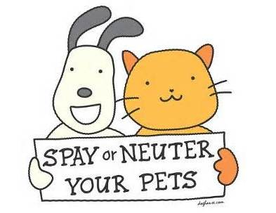 spay and neuter image