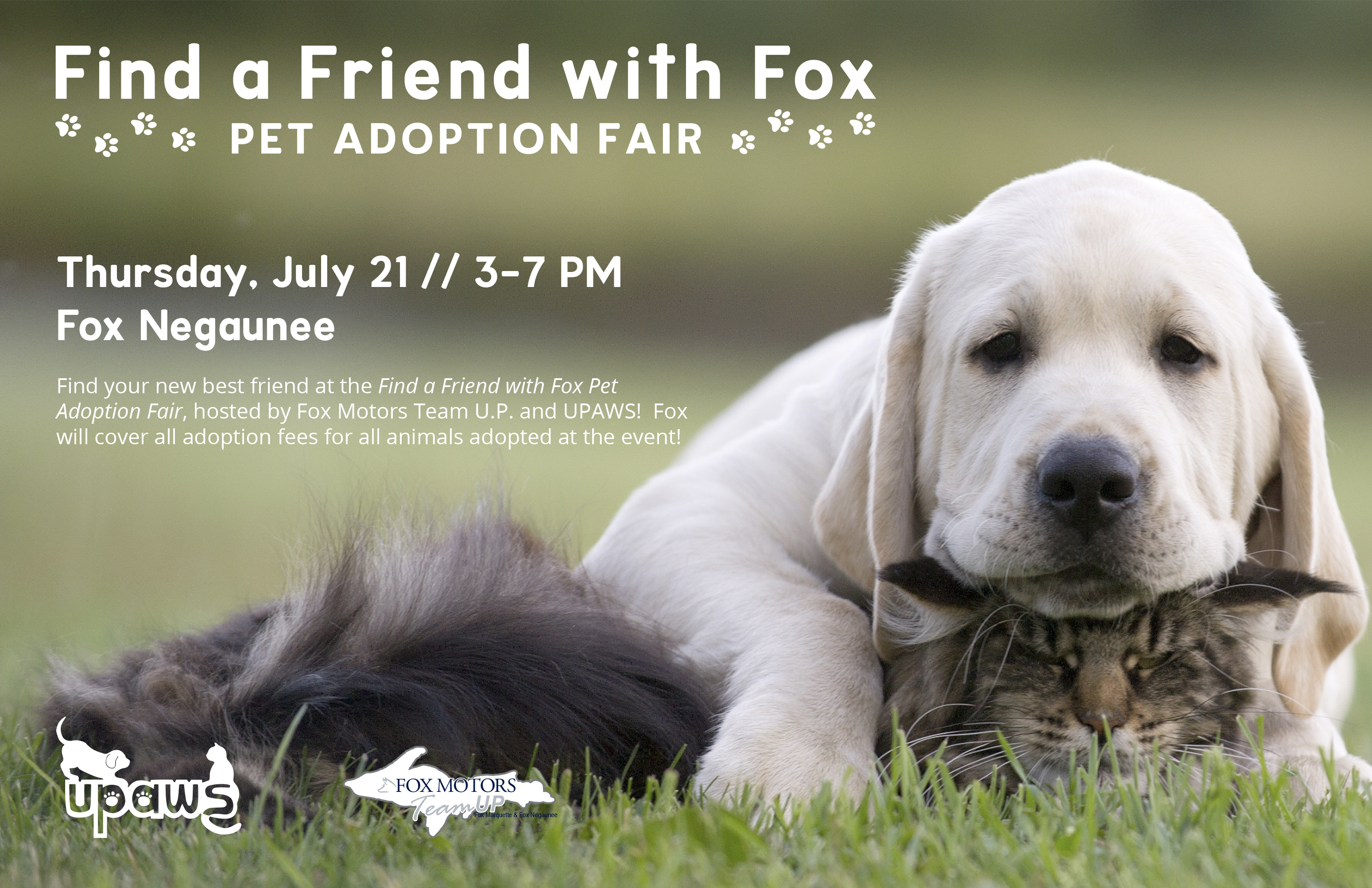 Find A Friend With Fox Pet Adoption Fair Is On July 21st