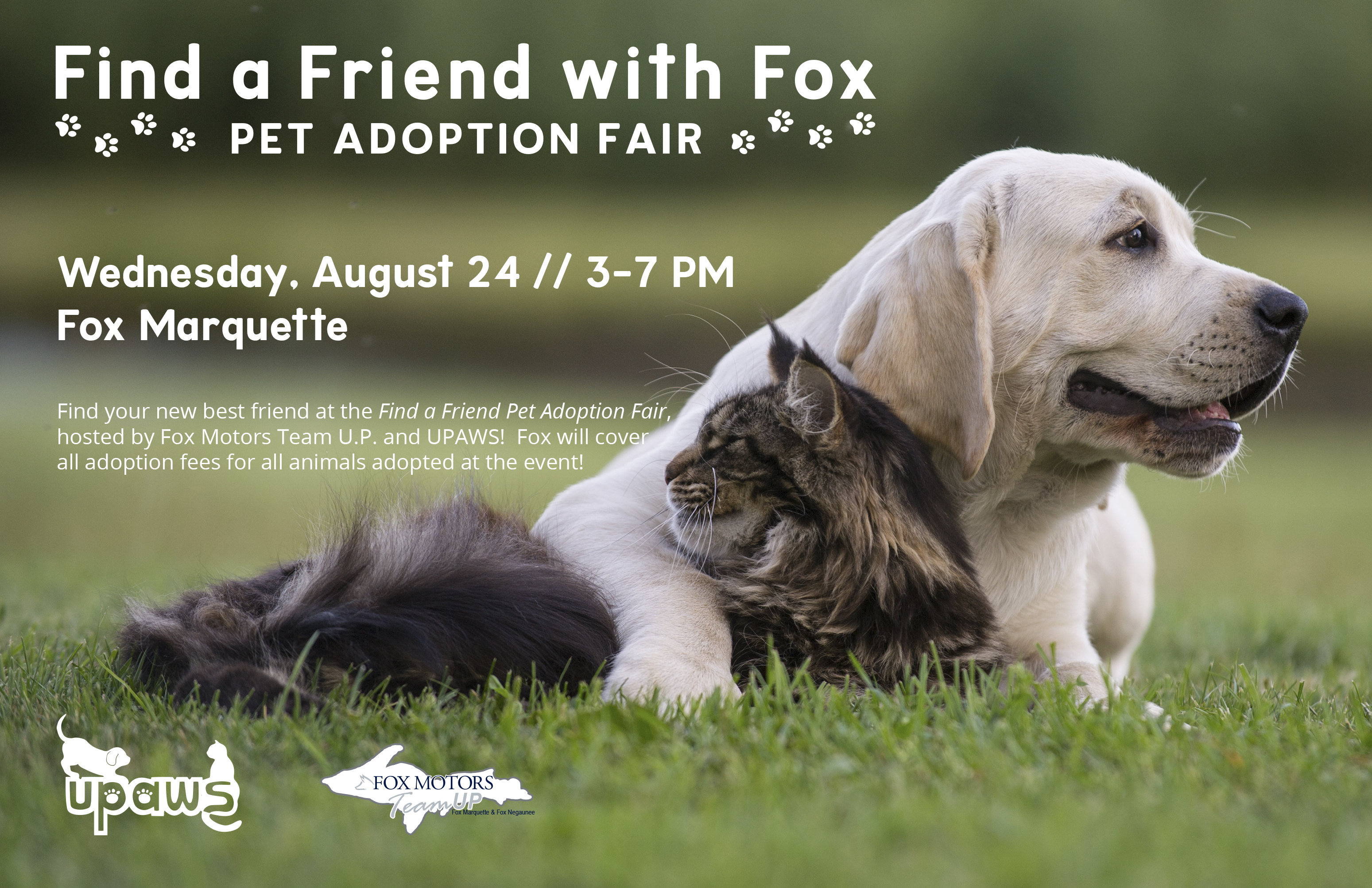 Find A Friend With Fox Marquette Upaws Upper